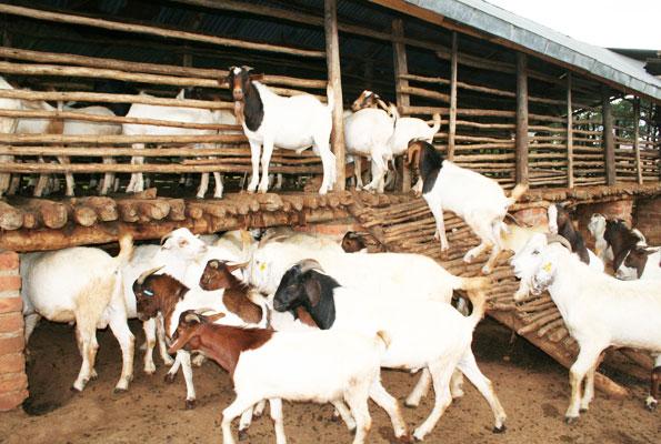 May 2019 – Jaguza Farm Market