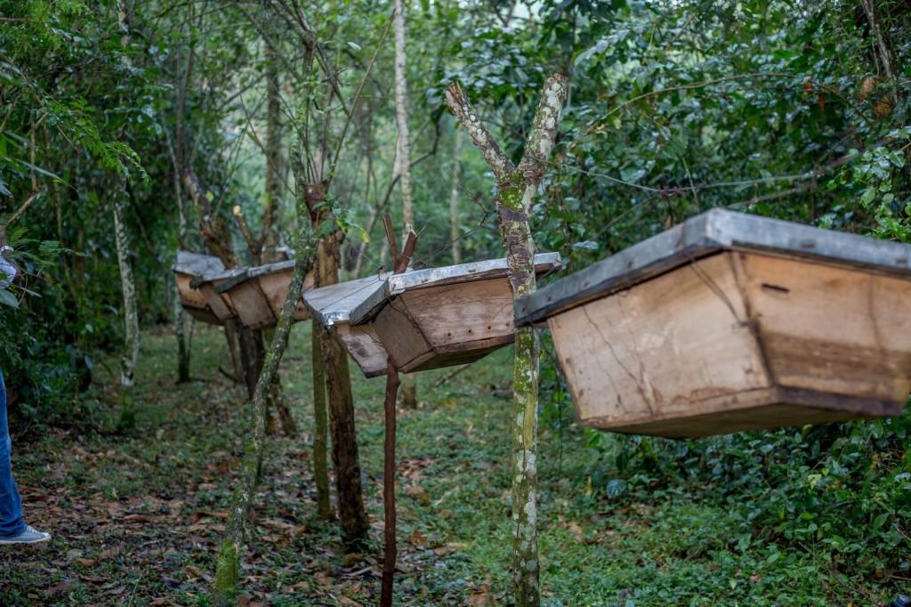 Stories – Jaguza Farm Support