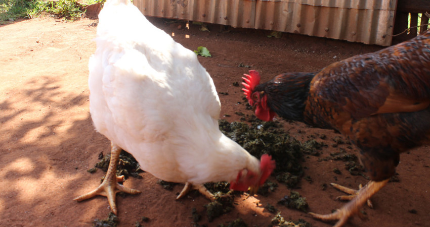 Organic Model farm with Lessons for beginners – Jaguza Farm Support