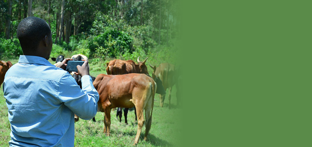 Jaguza Farm – Everything in one place